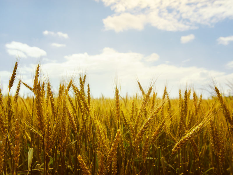 Medius.Re Expands to Wheat