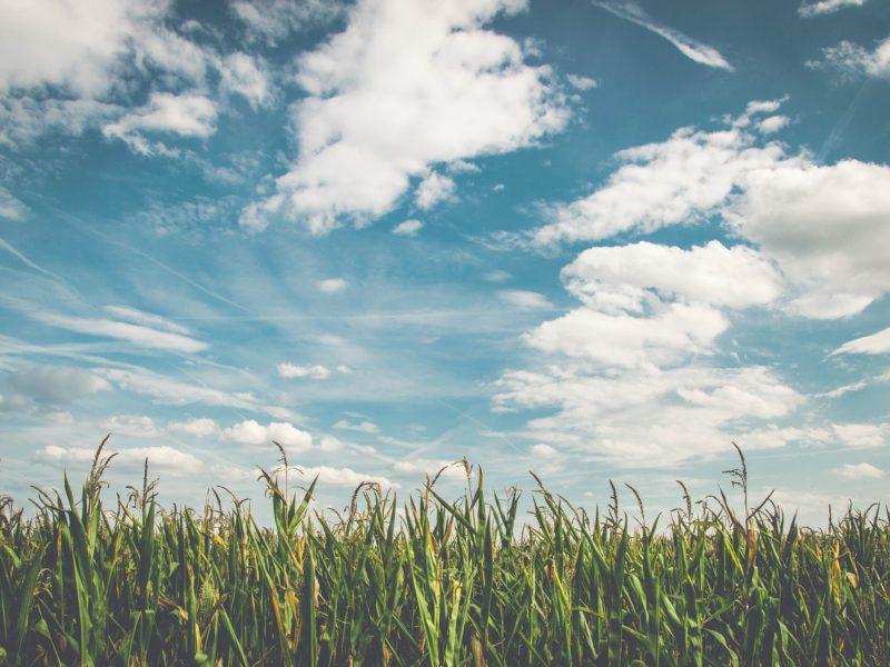 Field Corn Added to Medius.Re Portfolio