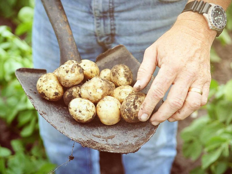 New Potato Trial Tutorials Available